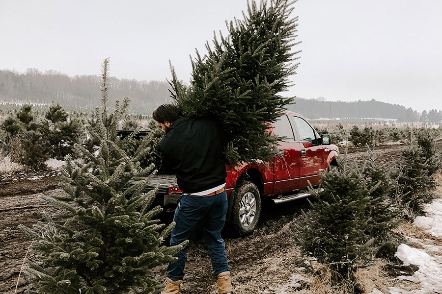 man putting a christmas tree into a pickup truck